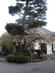 Hakuins Tempel