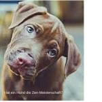 Hat ein Hund die Zen-Meisterschaft?